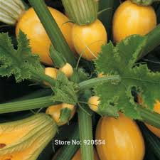 compare prices on yellow squash plant online shopping buy low