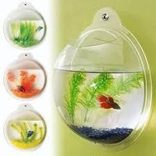 Fish Bathroom Accessories Best 25 Fish Bathroom Ideas On Pinterest Daily Talk Shows One