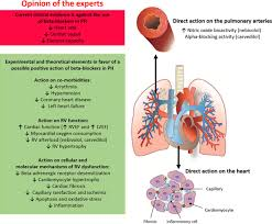 Heart Anatomy And Function Use Of β Blockers In Pulmonary Hypertension Circulation Heart