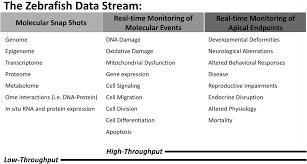 zebrafish as an in vivo model for sustainable chemical design