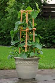 support climbing vegetables and vines direct them upward with the