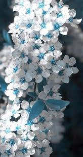 white and blue flowers 224 best flowers images on beautiful flowers flowers