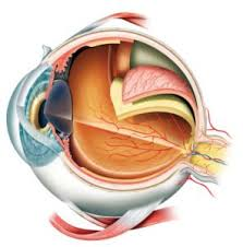 flashing lights in eye stroke light flashes in the eye causes symptoms and treatment