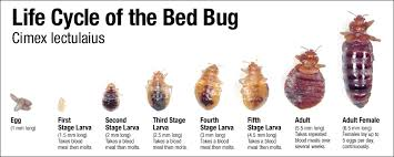 Bed Bugs How Do You Get Them How To Get Rid Of Bed Bugs 3 Tips On How To Get Rid Of Them