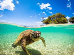 what types of sea animals eat sea turtles