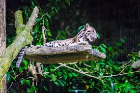 safari is singapore night safari worth the expense