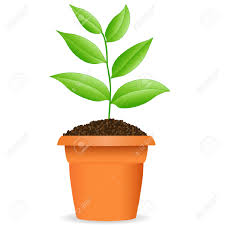 pot plant clipart cute flower pencil and in color pot plant