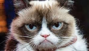 Gato Meme - grumpy cat el gato de los memes gana demanda