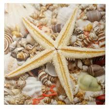 Assorted Seashells Conch Shell Ceramic Tile Zazzle Com