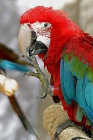 world bird sanctuary december 2010