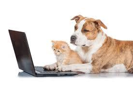 K He Im Internet Kaufen Kleinanzeigen Im Online Tiermarkt So Erkennt Ihr Betrüger Und