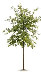 Tree Event Gertens Workshops Arbor Day Event And Architecture Mn Issue