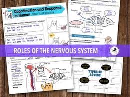 Describe A Reflex Action Coordination And Response Bundle Nervous System U0026 Reflex Action