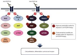 molecular testing for gastrointestinal cancer