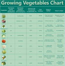 herb growing chart how to grow your own food for increased security health financial