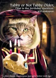 funny cat card u0027tabby or not tabby older u0027 to be or not to be