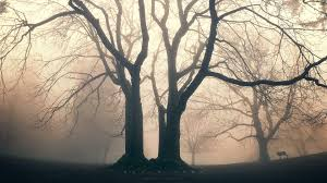 mist tag wallpapers fog druid mist mood trees nature garden bokeh