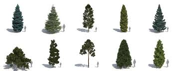 new laubwerk plants kit 5 temperate conifers now available