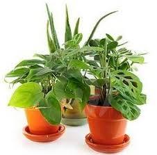 houseplant care u2013 easy gardening