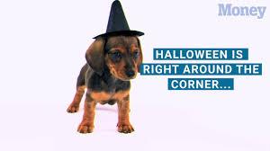 Secret Service Halloween Costume Halloween Costumes Dogs Pet Costume Ideas Money