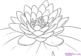 how to draw a lotus water lily step by step flowers pop