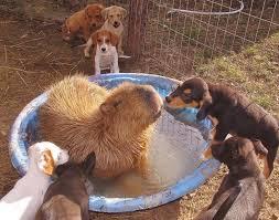 Arkansas traveling with pets images 188 best animal sanctuaries images animals wild jpg