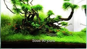 Takashi Amano Aquascaping Techniques Aquarium Aquascape 60 Litres Fr Youtube