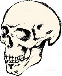 skull drawing stock vector art 514730947 istock