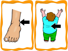 body parts cards 9 free printable flashcards