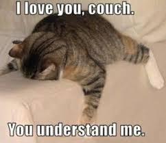Funny Kitten Meme - cat memes funny list of white cat and kitten memes