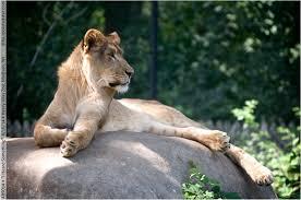 henry vilas park zoo