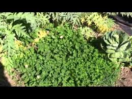 gardening with cover crops youtube