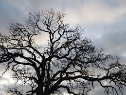 free photo tree branches silhouette outdoor free image on