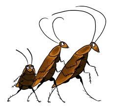 cockroach cartoon cockroach