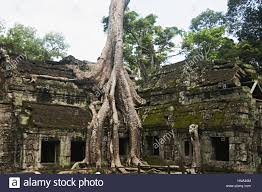 ta prohm angkor cambodia jungle temple with trees