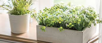 plants indoors 5 tips for bringing outdoor plants indoors for the winter