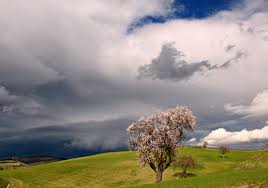 wallpaper sunlight trees landscape flowers hill nature