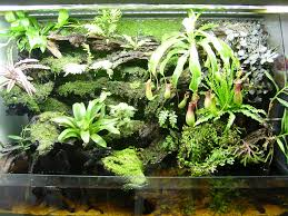 terrariums for cps u2014 petpitcher com