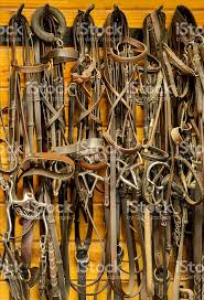 the tack room bits and bridles on the wall of the tack room stock photo more