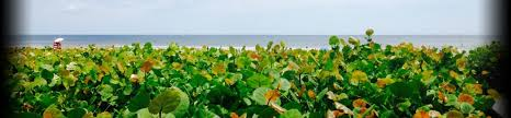 Cocoa Beach Cottage Rentals by Cocoa Beach Vacation Rentals And Apartment Rentals Flipkey