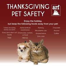 tex says keep your pet safe this thanksgiving i m in