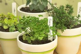 Online Herbs Shopping Project