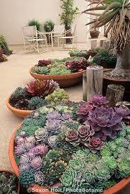 346 best plantsss images on pinterest succulents garden