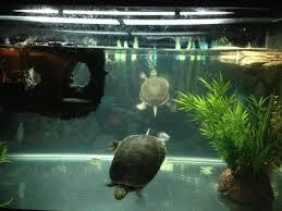 Tortoise Home Decor Big Aquarium Turtle Home Decor Ideas How To Turtle Home Decor In