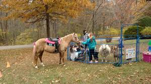 Massachusetts travel pony images Enchanted animal parties home facebook