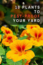 17 best ideas about garden pests on pinterest organic gardening