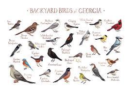 Georgia birds images Georgia backyard birds field guide art print kate dolamore art jpg
