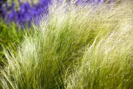 the easiest grasses to grow in your garden