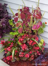 give your potted plants a boost