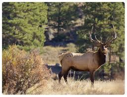 Montana wildlife images Montana wildlife federation png